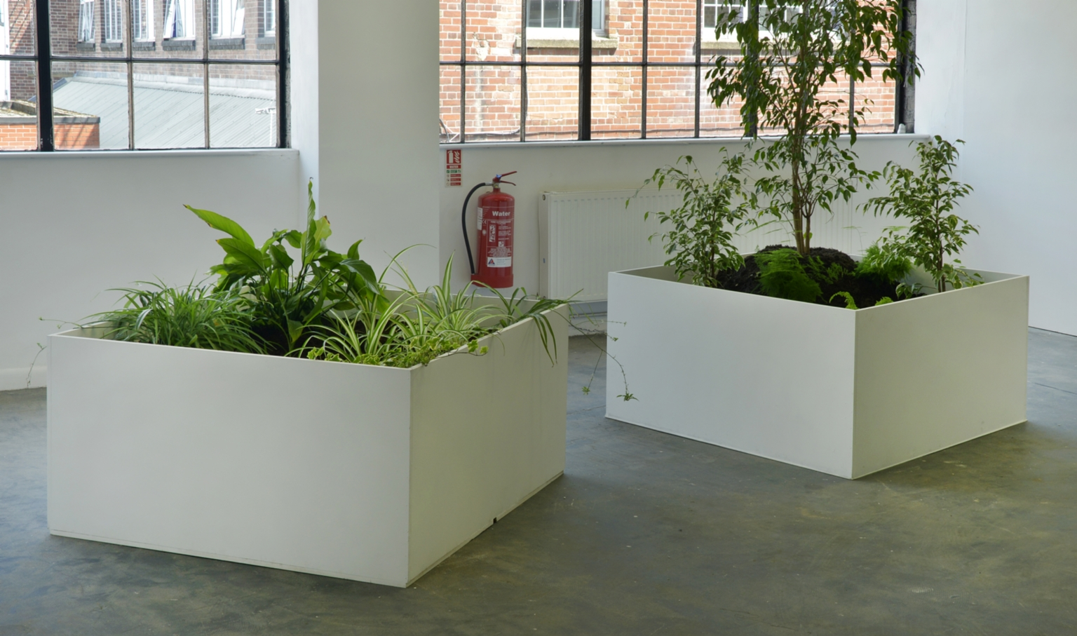 'An Encounter with Chlorophytum Comosum' (left) and 'An Encounter With Three Ficus Benjamina '